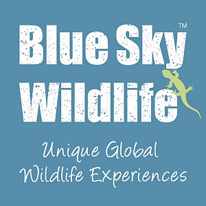Blue Sky Wildlife
