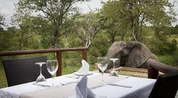 Elephant and private dining table, Idube Game Reserve.